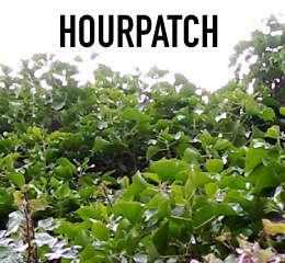 HourPatch